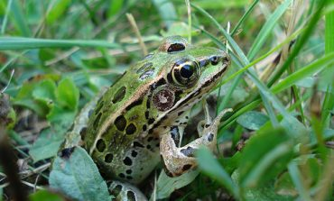 Little Explorers Learn about Salamanders and Frogs at Audubon, Saturday, March 11