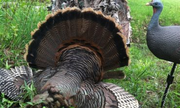 Free Wild Turkey Biology and Hunting Seminar