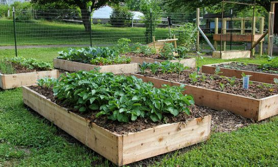 Audubon July 6 Raised Bed Gardening Workshop Free Thanks to Cummins