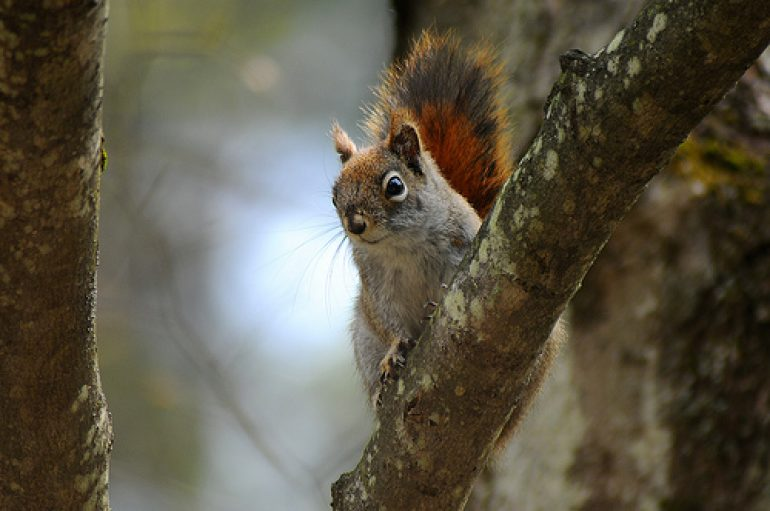 Little Explorers Learn about Squirrels at Audubon, Saturday, November 11