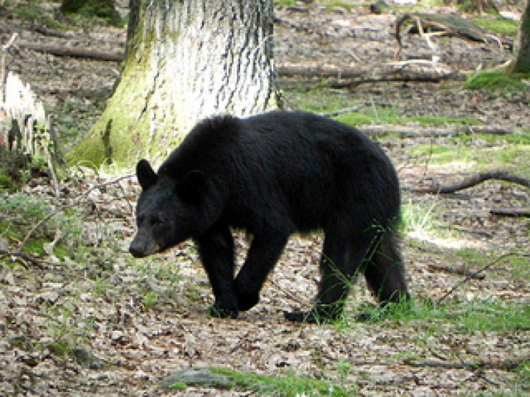 Little Explorers Learn about Bears at Audubon, Saturday, December 9