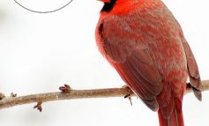 Audubon Taking Bird Seed Orders Through Saturday, January 27