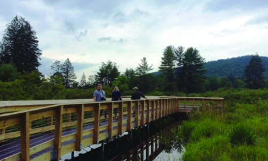 Audubon First Friday Field Trip to New Allegany State Park Boardwalk, July 6