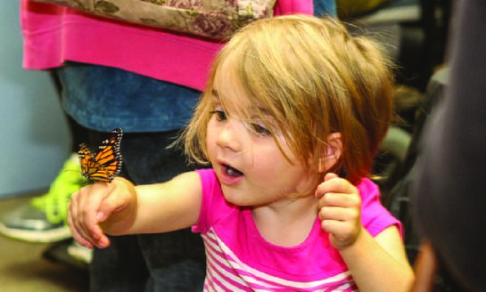 Many Activities at Audubon's Monarch Butterfly Festival, Saturday, August 25